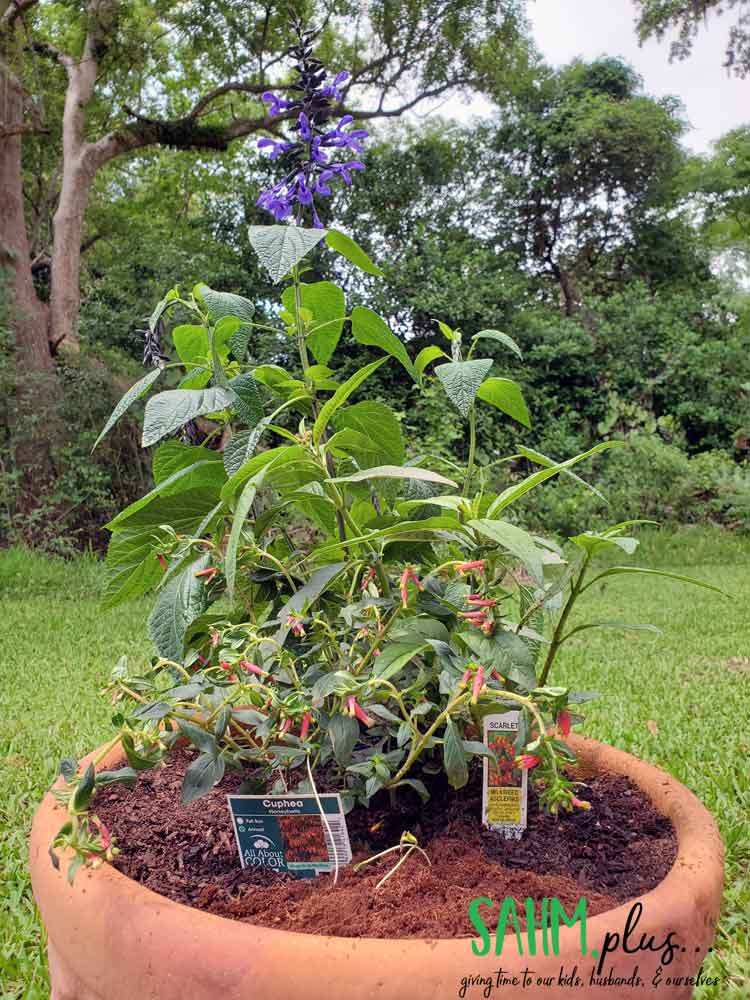 photo of hummingbird, bee, and butterfly garden in a pot