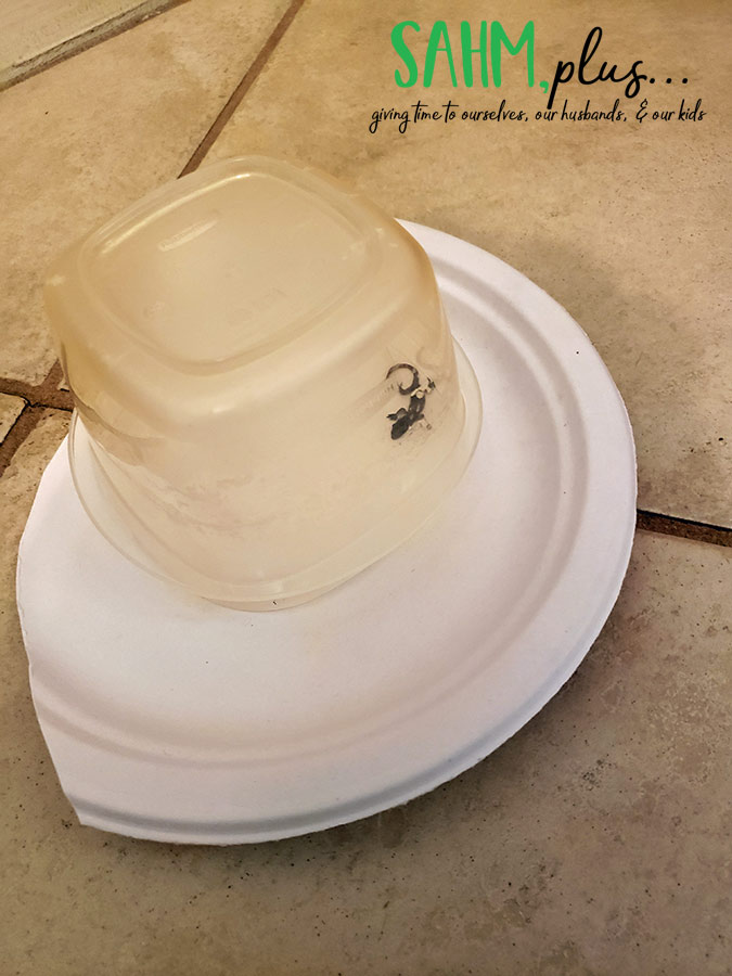 Caught lizard in the house using plastic bowl and paper plate | sahmplus.com
