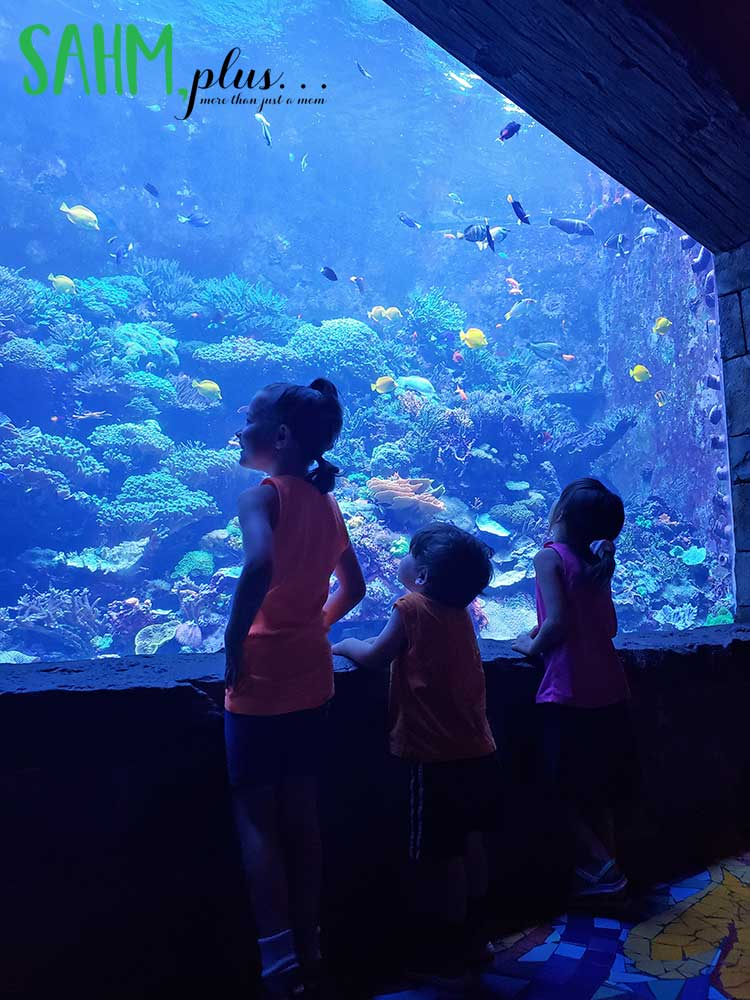 kids viewing a dark aquarium at SeaWorld Orlando | sahmplus.com