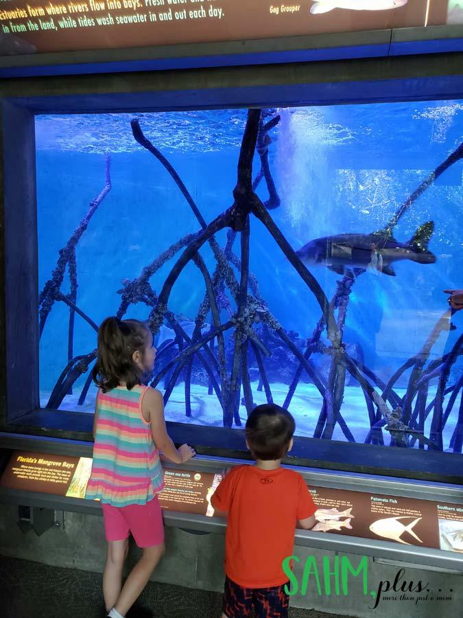 Kids standing in front of a large fish aquarium at The Florida Aquarium in Tampa | sahmplus.com