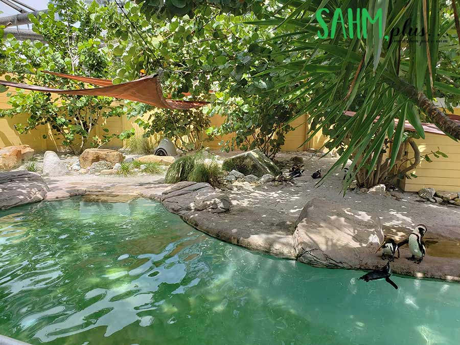 Penguin exhibit at Zoo Tampa | sahmplus.com