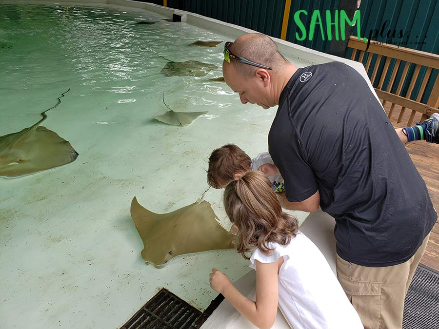 Family petting sting rays at Zoo Tampa | sahmplus.com