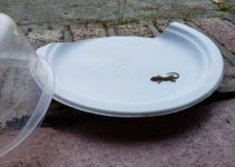 Removing a lizard from my home; releasing the lizard back to the outdoors | sahmplus.com