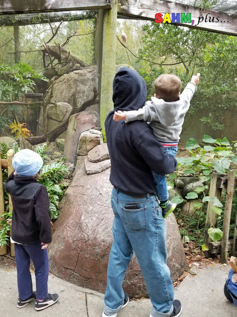 At the zoo - reward ideas for good behavior