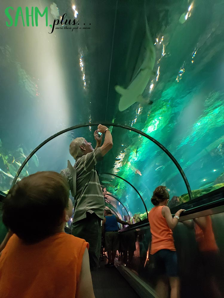 kids and grandpa viewing sharks overhead at SeaWorld Orlando | sahmplus.com