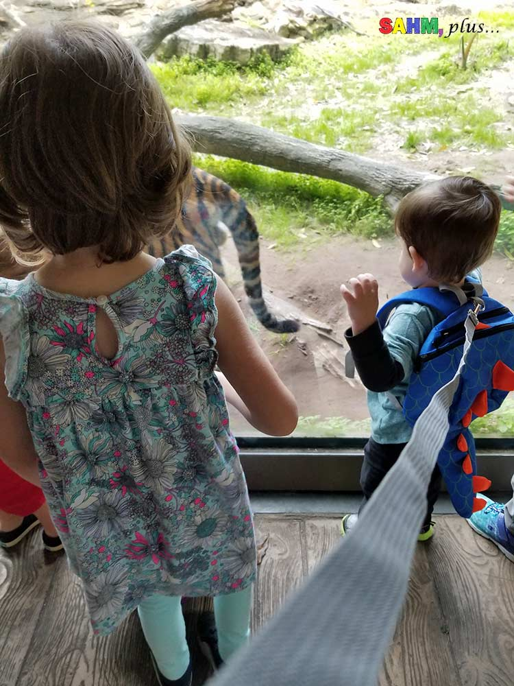 Toddler on a dinosaur backpack leash at the zoo | www.sahmplus.com