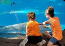 Kids viewing dolphins at SeaWorld Orlando | sahmplus.com