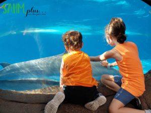 Kids viewing dolphins at SeaWorld Orlando | sahmplus.com
