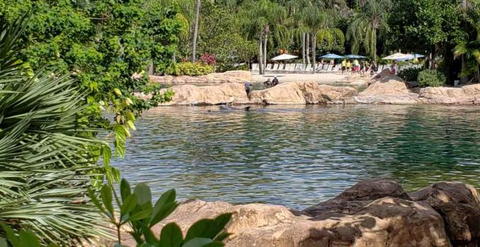 View of dolphin swim pool from our private cabana at discovery cove orlando